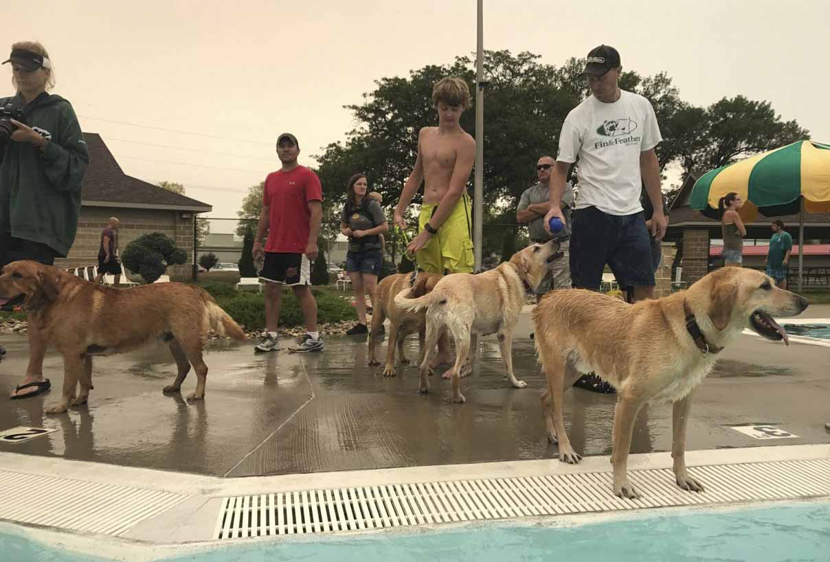 Several yellow labs enjoyed the view of the Monticello pool from the pool deck. Many dogs and their owners, young and old, enjoyed Labor Day at the Monticello Aquatic Center. (Photo by Sheralyn Schultz)