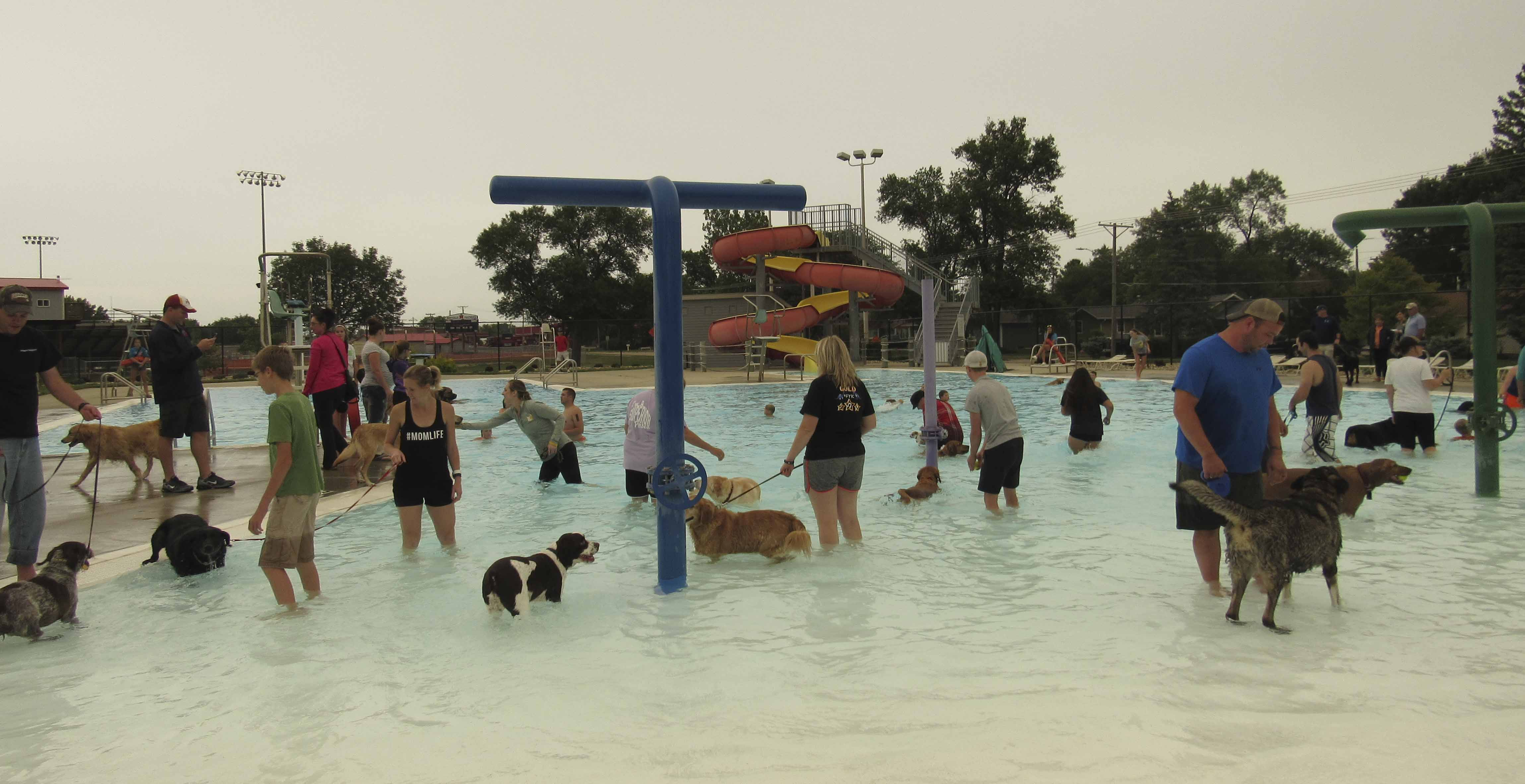 Labor Day marked the end of the summer and the last day for the Monticello Aquatic Center. A doggie swim was held that evening, with over 90 dogs in attendance. Donations were also collected for the Animal Welfare Friends Shelter. (Photo by Kim Brooks)