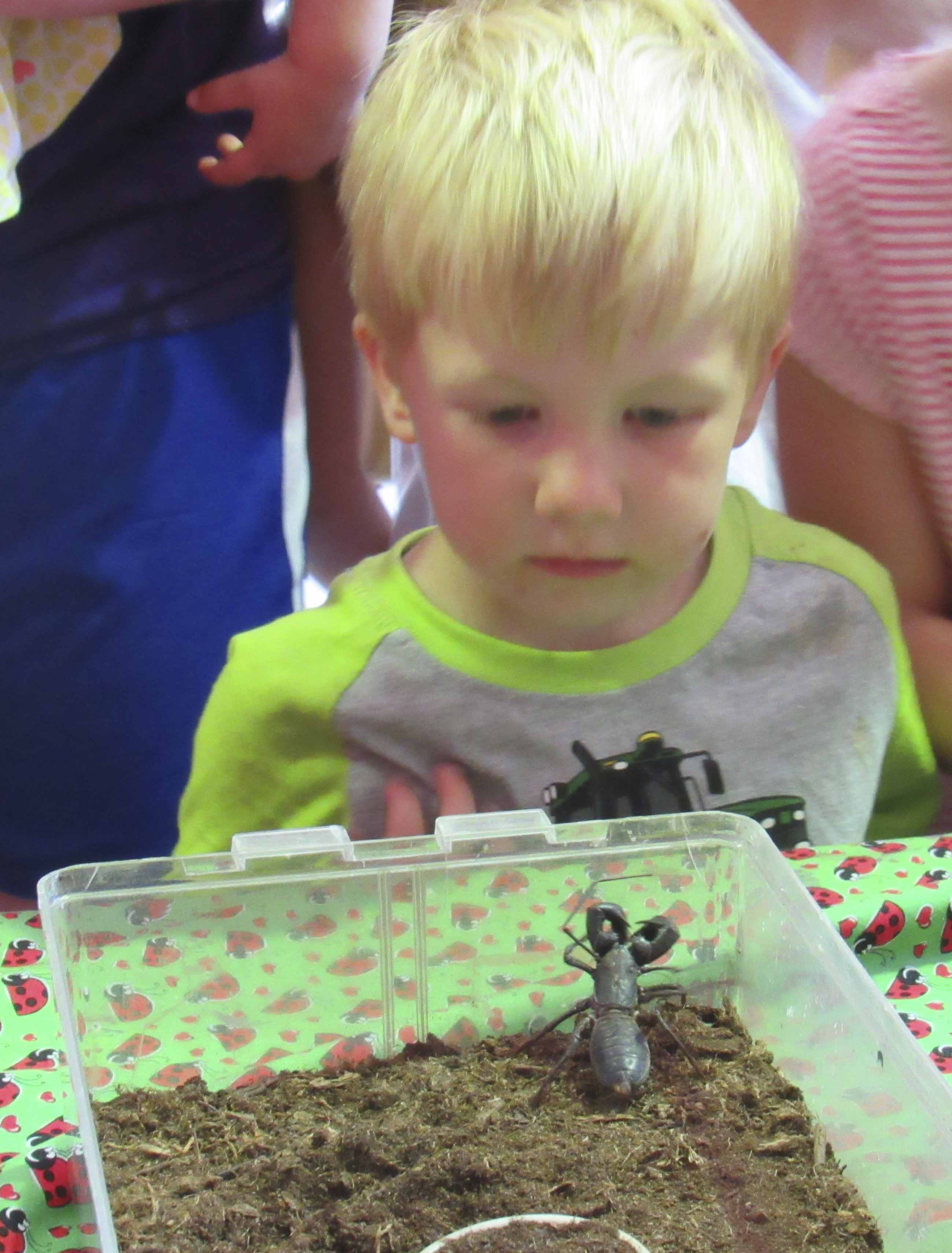 Iowa State University visited the Monticello Public Library on June 13 with their insect zoo, as part of the Summer Reading Program. Owen Russell cautiously looks at a scorpion.